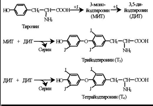 Химические формулы Т3, Т4, МИГ